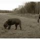 Mogi Hondenfotografie, hondenfotograaf, Labrador, Zwarte Labrador, Luna