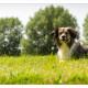 Mogi Hondenfotografie, hondenfotograaf, kruising