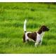 Mogi Hondenfotografie, hondenfotograaf, Heidewachtel