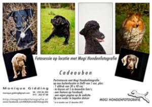 Mogi Hondenfotografie, cadeaubon, hondenfotograaf, fotosessie, hond