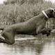 Mogi Hondenfotografie, hondenfotograaf, Slowaakse Ruwharige Staande Hond, sprong