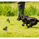 Mogi Hondenfotografie, hondenfotograaf, jachthonden