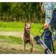 Mogi Hondenfotografie, hondenfotograaf, Australian Kelpie, Kelpie, Yilla