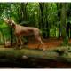 Mogi Hondenfotografie, Lóis, Slowaakse Ruwharige Staande Hond, Slovakian Rough Haired Pointer