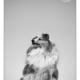 Mogi Hondenfotografie, hondenfotograaf, Sheltie, Shetland Sheepdog