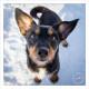 Mogi Hondenfotografie, portret, hondenportret, portret van hond, hond in sneeuw