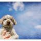 Mogi Hondenfotografie, hondenfotograaf, Slowaakse Ruwharige Staande Hond, pup, grey roan