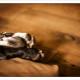 Mogi Hondenfotografie, Duitse Dog, Joy, hondenfotograaf, Chanel, paw