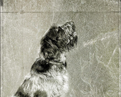 Mogi Hondenfotografie
