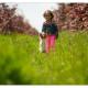 Vlinderhondje Bibi - Mogi Hondenfotografie