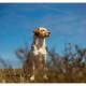 Bulgaarse mix Djoeka door Mogi Hondenfotografie