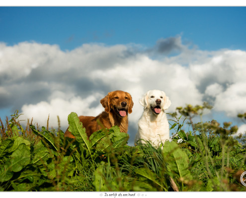 Golden Retrievers Luna en Romy - door Mogi Hondenfotografie
