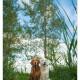 Golden Retrievers Luna en Romy - door Mogi Hondenfotografie