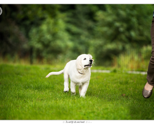 Dondertje, Golden Retriever pup door Mogi Hondenfotografie