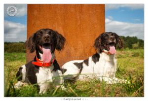 Heidewachtels Haley en Brikla door Mogi Hondenfotografie
