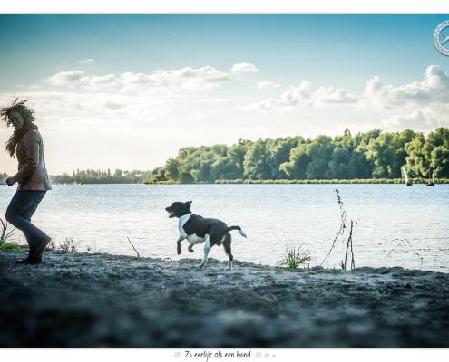 Gepke - Friese Stabij Kruising door Mogi Hondenfotografie