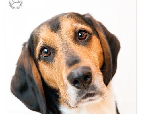 Dexter, Mogi Hondenfotografie