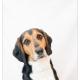 Dexter, , Mogi Hondenfotografie
