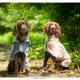 Duitse Staande Langharen Duko en Boele door Mogi Hondenfotografie