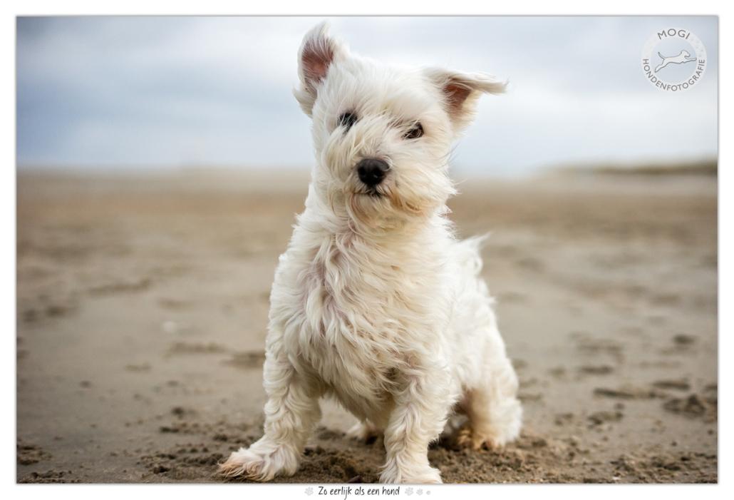 canvassessie foto's 2017 - mogi hondenfotografie