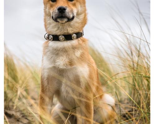 Fotoshoot voor halsbanden: Max Designer Dog