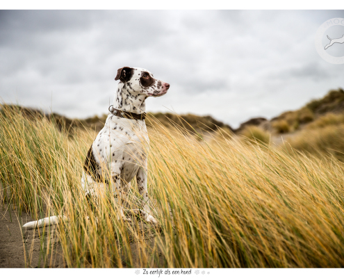 Fotoshoot voor halsbanden Designer Dog: Harvey