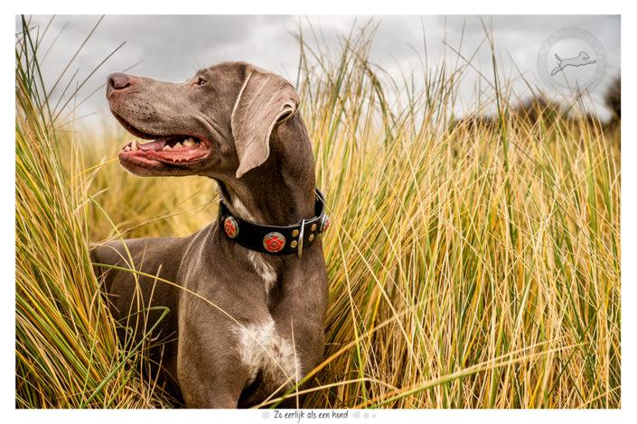 Nica, Slowaakse Ruwharige Staande Hond