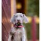 Mogi Hondenfotografie, hondenfotograaf, pup, puppy, Slowaakse Ruwharige Staande Hond