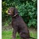 Mogi Hondenfotografie, hondenfotograaf, Duitse Staande Draadhaar