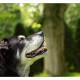 Mogi Hondenfotografie, Labmix, Taz, hondenfotograaf