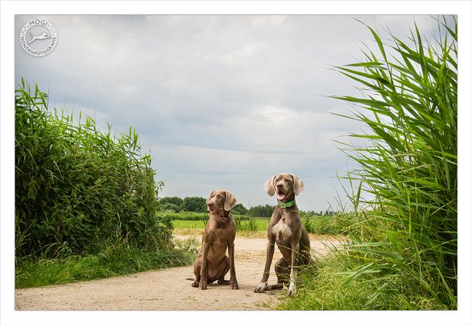 Mogi Hondenfotografie, hondenfotograaf, Lóis en Nica