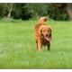 Mogi Hondenfotografie, hondenfotograaf, jachthond, jachthonden, KNJV Delfland