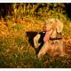 Mogi Hondenfotografie, hondenfotograaf, Weimaraner, Weimarse Staande Hond, Cees