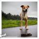 Mogi Hondenfotografie, Luna, Amerikaanse Stafford, Stafford, hondenfotograaf