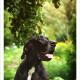 Mogi Hondenfotografie, Duitse Dog, Joy, hondenfotograaf, Chanel