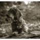 Mogi Hondenfotografie, hondenfotograaf, ruwharige teckel, teckel