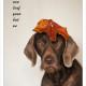 Mogi Hondenfotografie, hondenfotograaf, Slowaakse Ruwharige Staande Hond