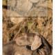 Mogi Hondenfotografie, hondenfotograaf