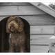 Mogi Hondenfotografie, hondenfotograaf, Labradoodle