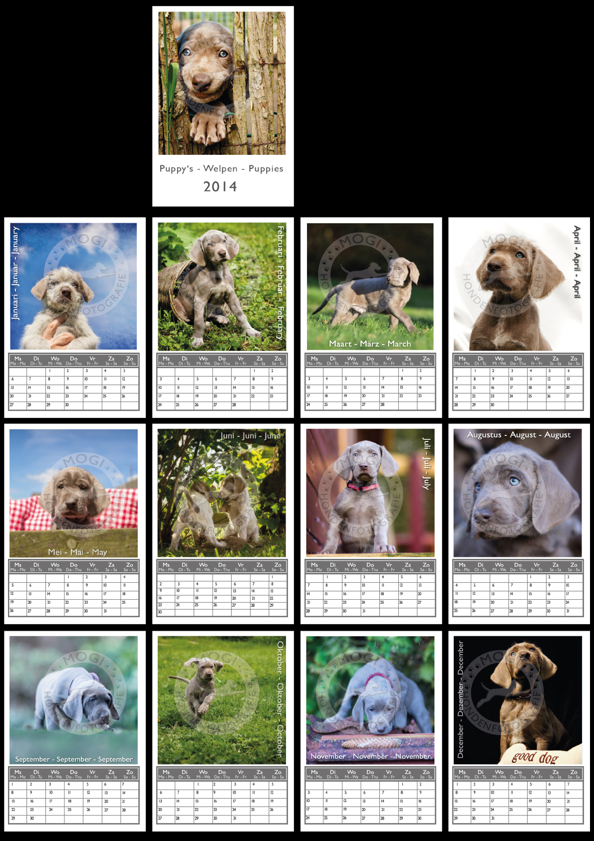 Mogi Hondenfotografie, kalender 2014, Slowaakse Ruwharige Staande Hond pups