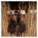 Engelse Springer Spaniel, ESS, Svenka, Dennenstaete, Mogi Hondenfotografie, hondenfotograaf