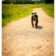 Blitz, de Amstaf mix gefotografeerd door Mogi Hondenfotografie