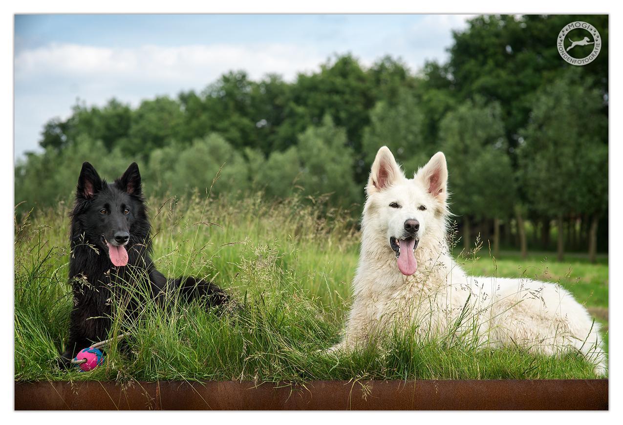 Fay en Wup gefotografeerd door Mogi Hondenfotografie