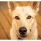 Toby, kruising herder - Labrador door Mogi Hondenfotografie