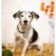Tommie, Jack Russel door Mogi Hondenfotografie