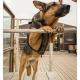 Liefdevol opgevangen - Mogi Hondenfotografie
