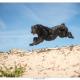Flatcoated Retriever Mara - door Mogi Hondenfotografie