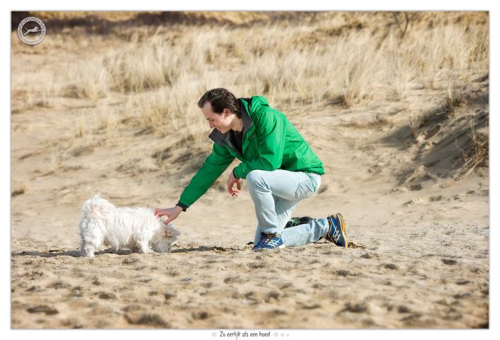 Kruising Maltezer / Westie Billy - Mogi Hondenfotografie