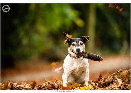 Floortje, Jack Russel Terrier door Mogi Hondenfotografie