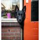 Duitse herder Borus, Mogi Hondenfotografie